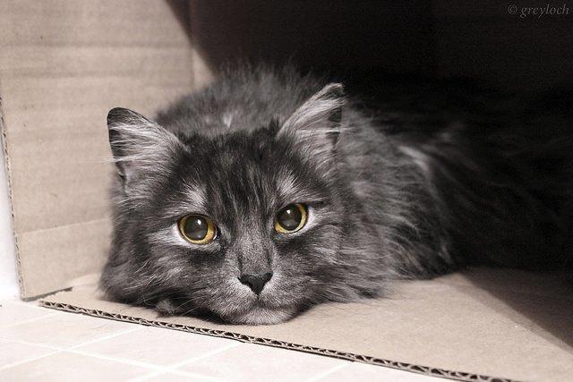 Исследование: почему коты так любят коробки . Изображение № 1.
