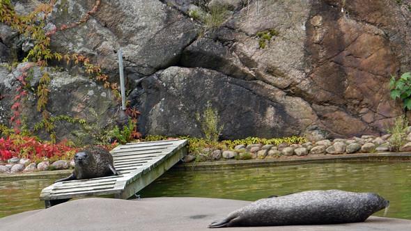 Бассейн с живыми тюленями. Изображение № 7.