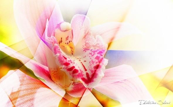 Время цветения. Изображение № 3.
