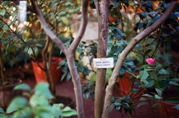 Прогулка по Ботаническому саду. Изображение № 17.