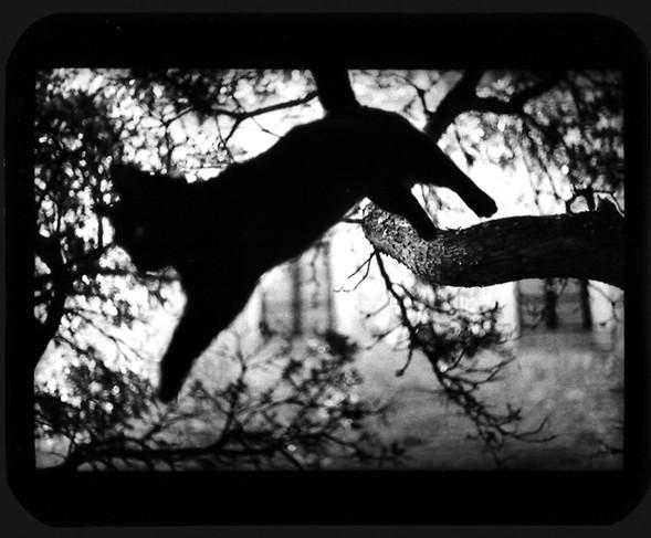 Джакомо Брунелли и«другие» животные. Изображение № 11.