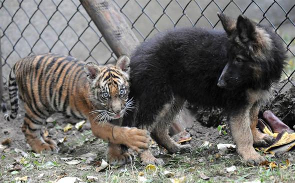 Дружба - она и у животных дружба!. Изображение № 11.