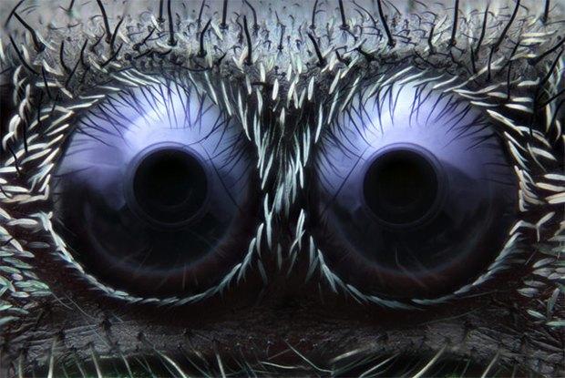 Что не видит глаз: Лучшие микроскопические фотографии этого года. Изображение № 3.
