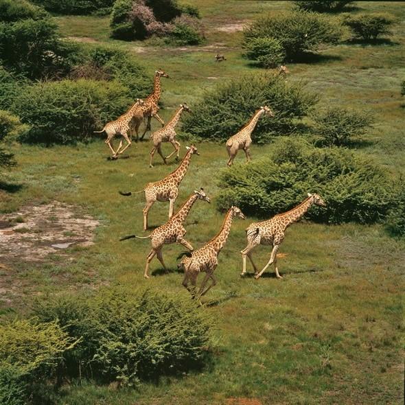 Ботсвана. Изображение № 7.
