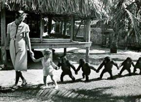 В мире животных: Герои «Мадагаскара» в мемах, рекламе и видеороликах. Изображение № 99.