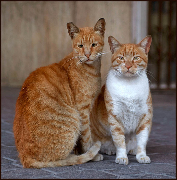 Блудливые коты. Изображение № 1.