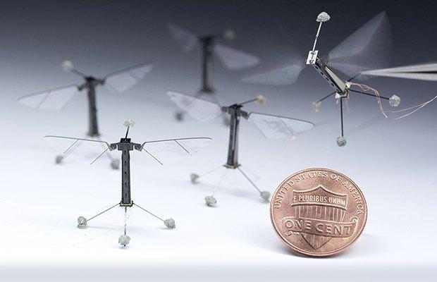 Он летает при помощи крыльев, которые за минуту способны делать около 7200 взмахов. Изображение №6.