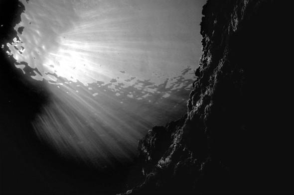 Подводная жизнь глазами фотографа Карлоса Франко. Изображение № 15.