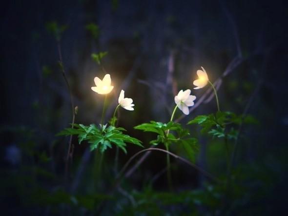 Весна в лесу. Изображение № 6.