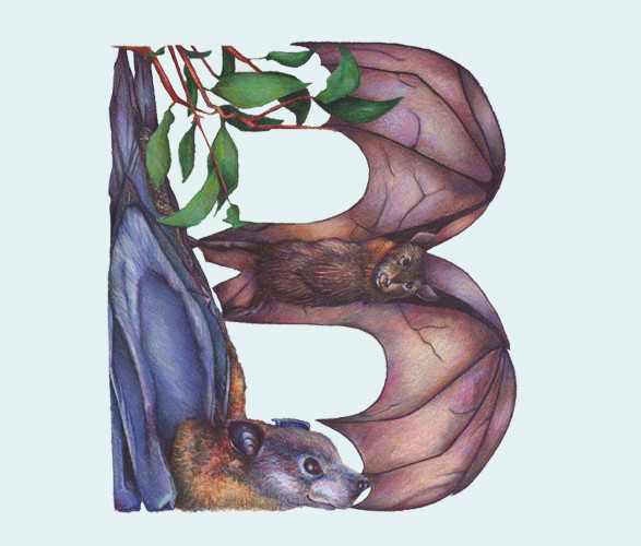 Животный алфавит. Изображение № 23.