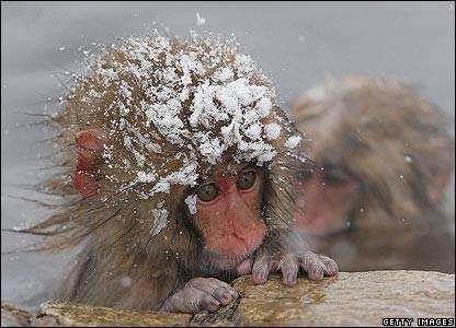И даже обезьянам нужен отдых. Изображение № 3.