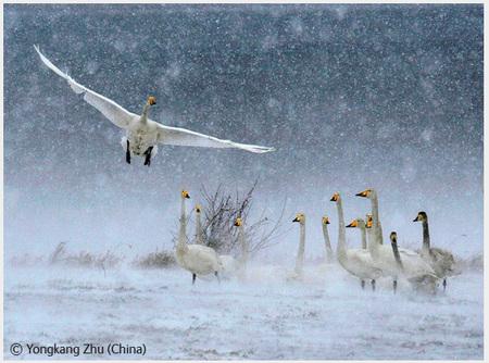 Победители Wildlife Photographer 2008. Изображение № 55.