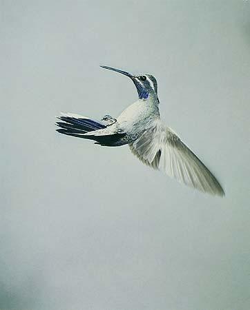 Элиот Портер: фотограф раскрасивший мир. Изображение № 14.