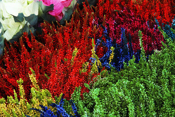 Columbia Road Flower Market/Цветочный рай. Изображение № 12.