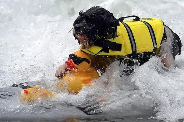 Лучшие новые снимки от National Geographic. Изображение № 41.