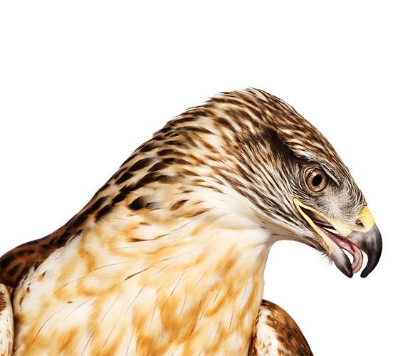 Божественные птицы Andrew Zuckerman. Изображение № 12.