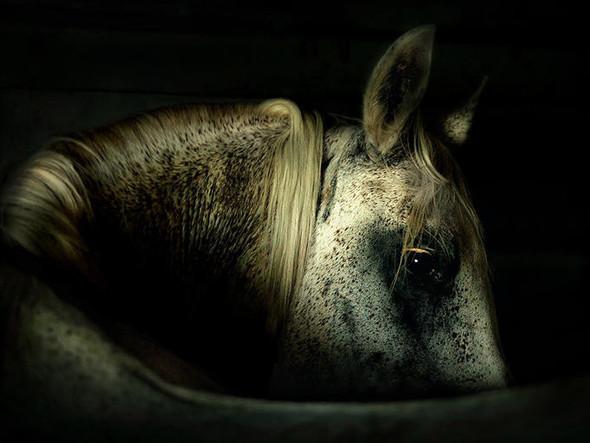 Фотографии лошадей Wojtek Kwiatkowski. Изображение № 5.
