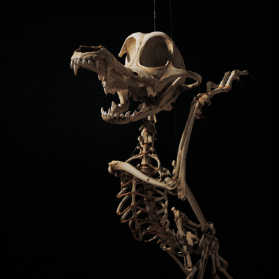 Мультяшные скелеты вшкафу ХюнгкуЛи. Изображение № 2.