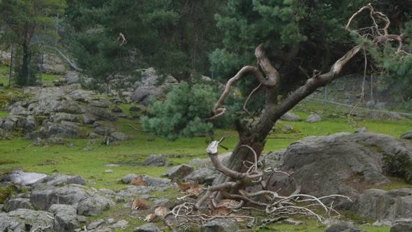Большая резервация с оленями. Изображение № 1.