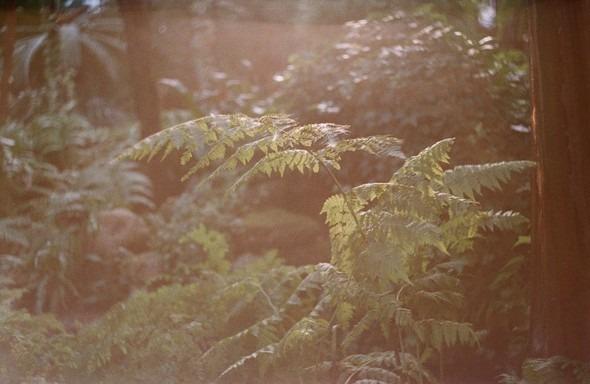 Прогулка по Ботаническому саду. Изображение № 2.