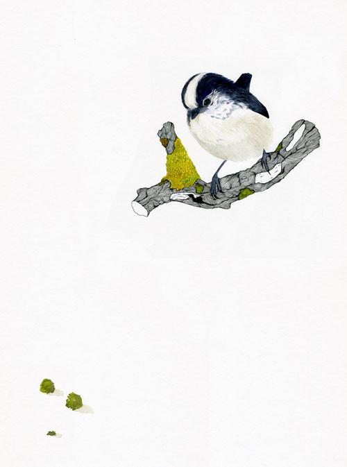 Birds Of Claire. Изображение № 8.