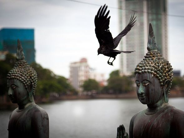 Buddhas and Bird, Sri Lanka. Изображение № 29.
