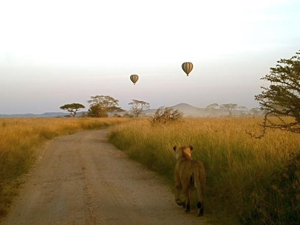 Лучшие новые снимки от National Geographic. Изображение № 44.