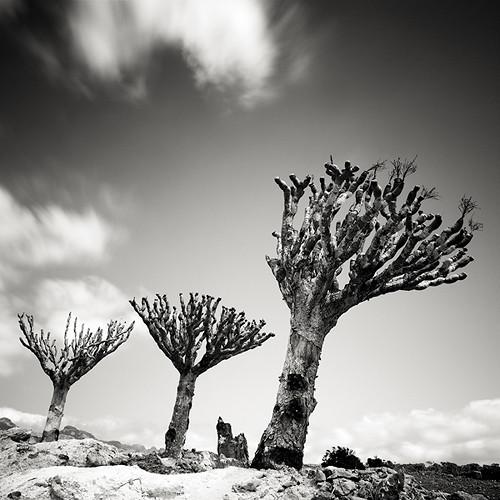 Пустынные пейзажи. Джозеф Хофленер. Изображение № 9.