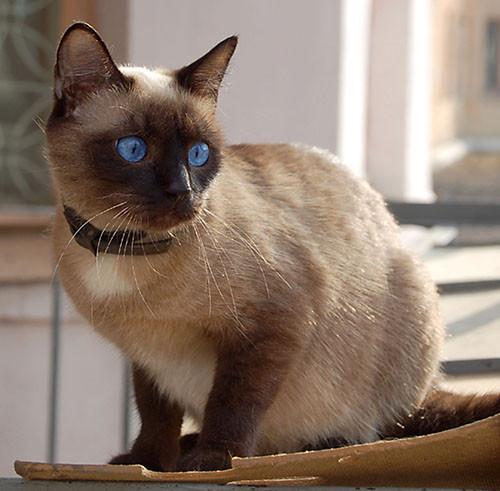 Кошки в интерьере. Изображение № 1.
