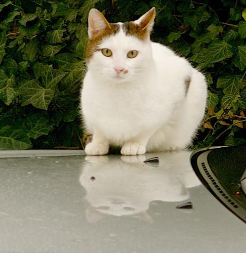 Котики и авто. Изображение № 5.