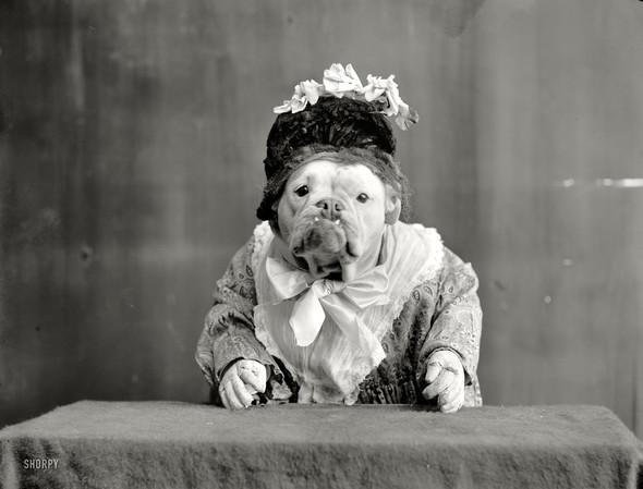 Фотографии с животными, начало прошлого века. Изображение № 2.