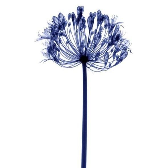 Изображение 19. Цветы под рентгеном.. Изображение № 18.