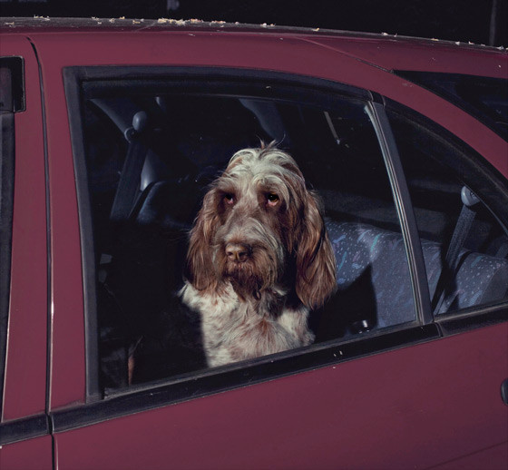 The silence of dogs in cars. Изображение № 2.