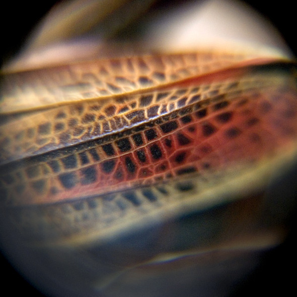 Morphology. Изображение № 22.