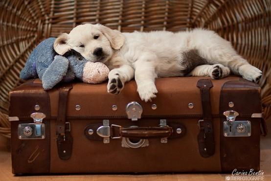 Puppy, puppy, 1-2-3!. Изображение № 19.