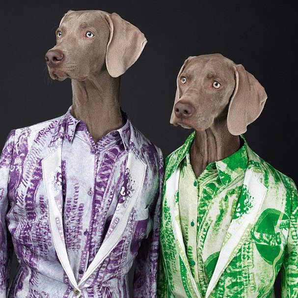Acne одели собак в свою коллекцию. Изображение № 2.