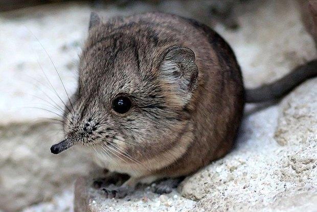 Как учёные находят новых животных: 10 недавно открытых видов. Изображение № 10.
