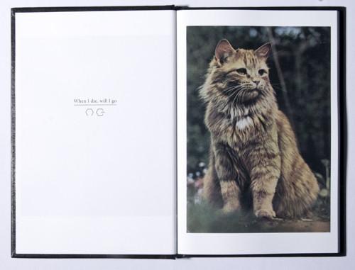 Кошка сама по себе. Изображение № 8.