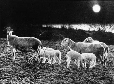 Mario Giacomelli – эстет мрака. Изображение № 43.