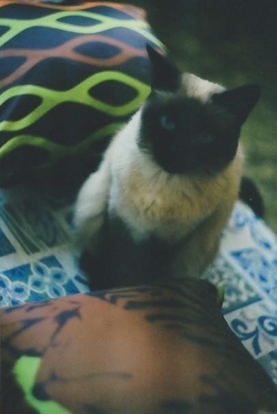 О кошках и подушках. Изображение № 4.