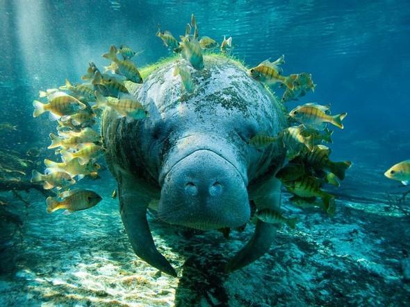 Лучшие снимки от National Geographic (золотой фонд). Изображение № 28.