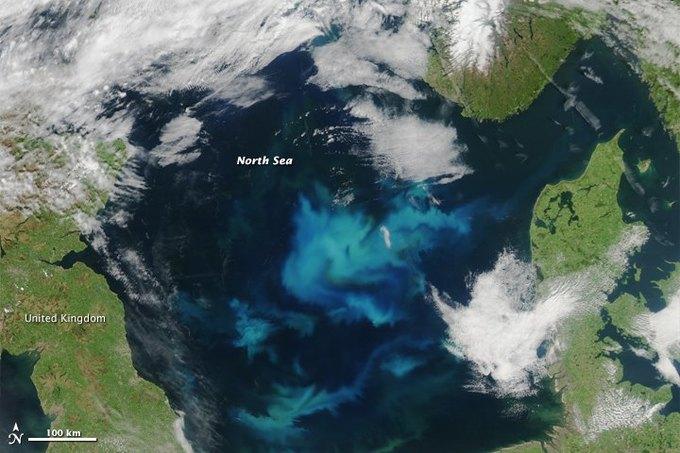 Цветение планктона в море показали со спутника. Изображение № 2.