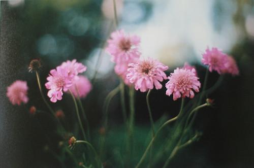 Изображение 6. Никогда не надо слушать, что говорят цветы. Надо просто смотреть на них и дышать их ароматом... Изображение № 6.