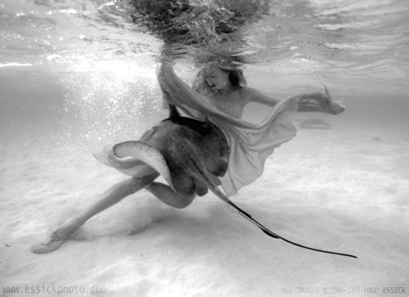 Todd Essick. Подводный мир. Изображение № 13.