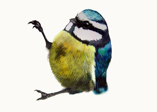 Birds Of Claire. Изображение № 5.