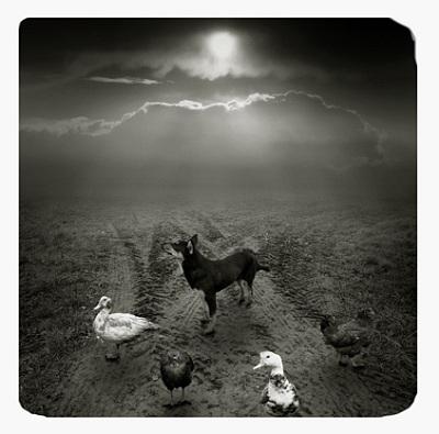 Польский фото-художник Michal Giedrojc. Изображение № 8.