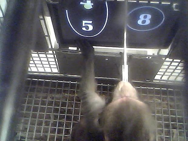 Учёные обучили обезьян математике. Изображение № 1.