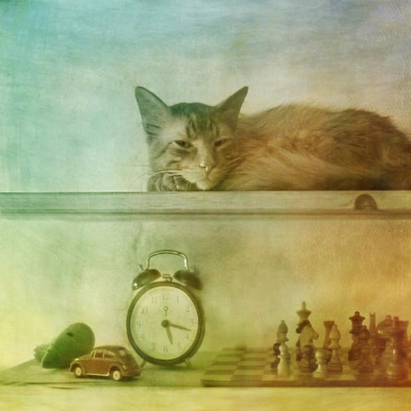 Блудливые коты. Изображение № 11.