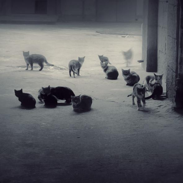 Блудливые коты. Изображение № 9.