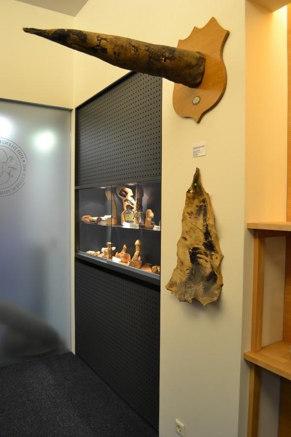 Фаллологический музей вернулся в Рейкьявик. Изображение № 18.